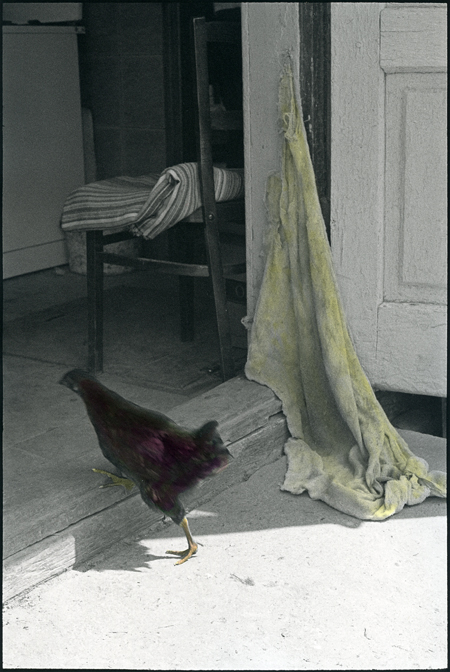 Huhn_Schwelle_COLOR_Maiwind.jpg